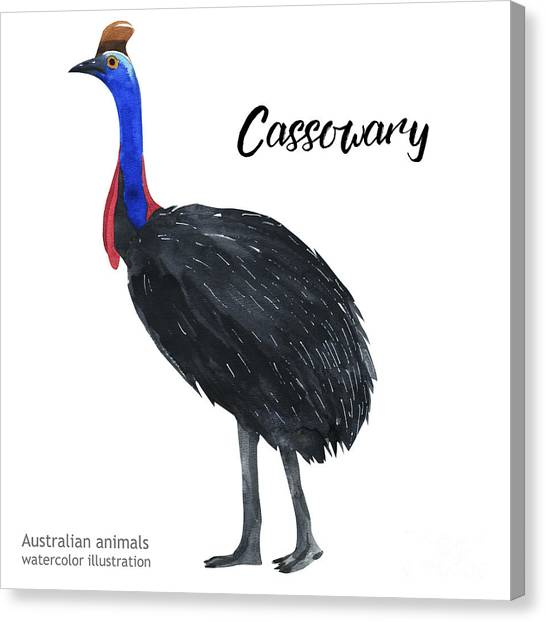 Australian Animals Watercolor Canvas Print by Kat branches