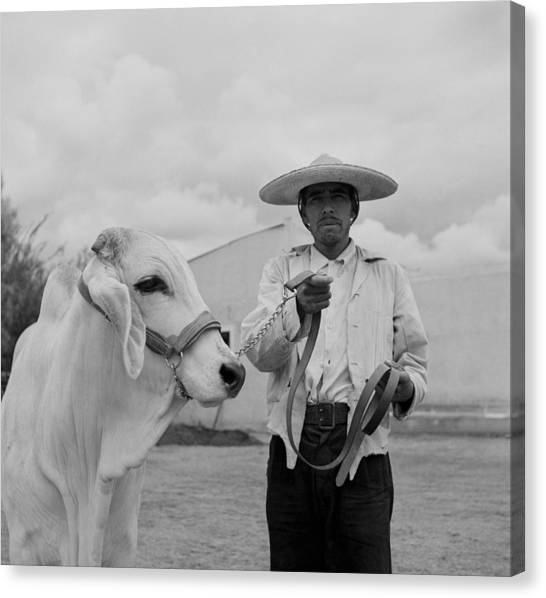 Ranching In Michoacan, Mexico Canvas Print by Michael Ochs Archives