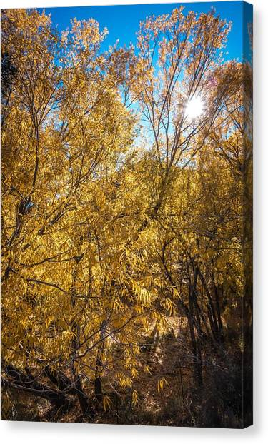 Canvas Print featuring the photograph Autumnal Park. Autumn Trees And Leaves. Fall by Alex Grichenko