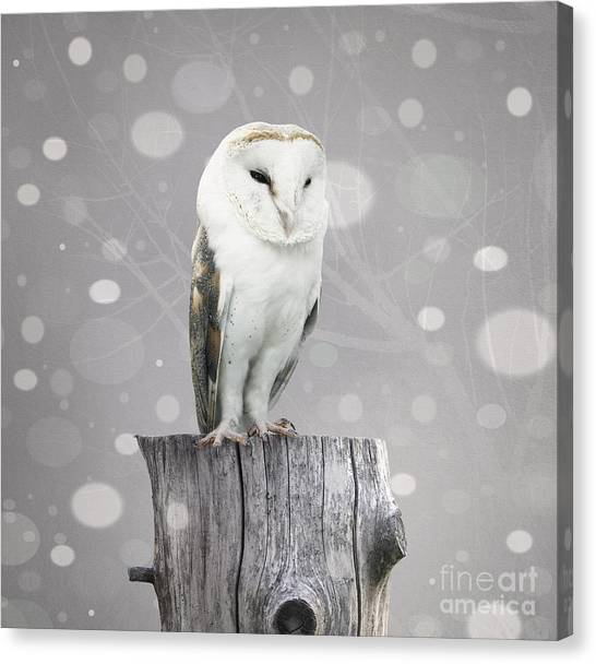 Grey Background Canvas Print - A Beautiful Barn Owl Above A Trunk With by Valentina Photos