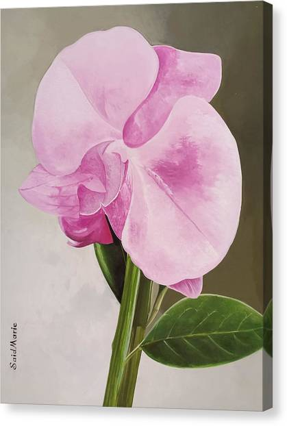 A Beautiful Rose Canvas Print
