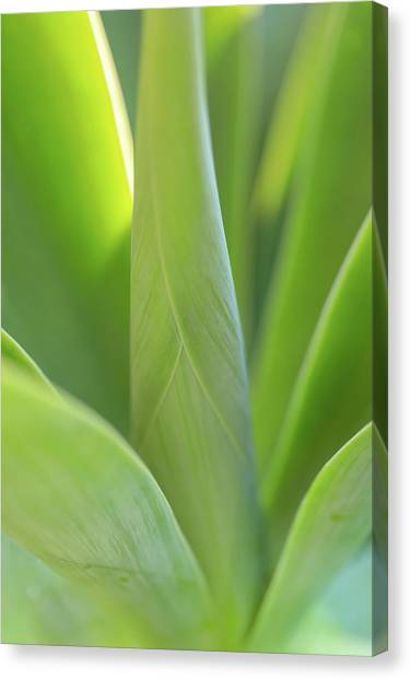 A Bouquet Of Leaves Canvas Print