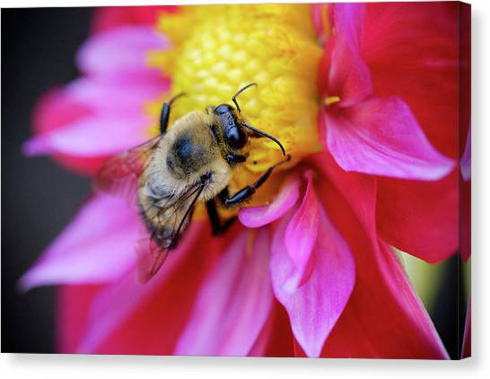 A Bumblebee On A Flower Canvas Print