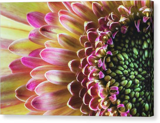 A Burst Of Spring Canvas Print