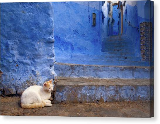 A Cat In Chefchaouen Canvas Print