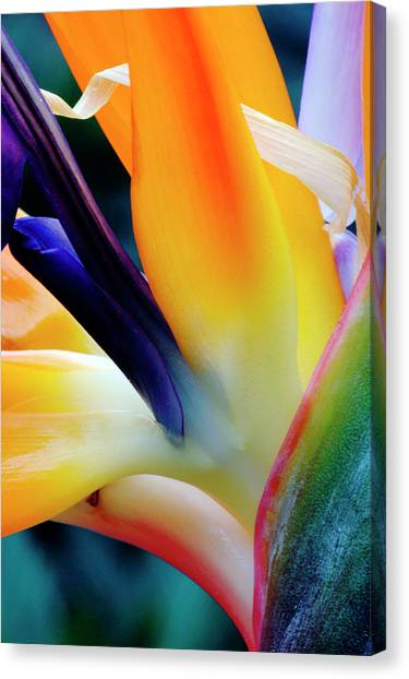 A Close-up Of A Flower Of A Bird Of Canvas Print by Eromaze