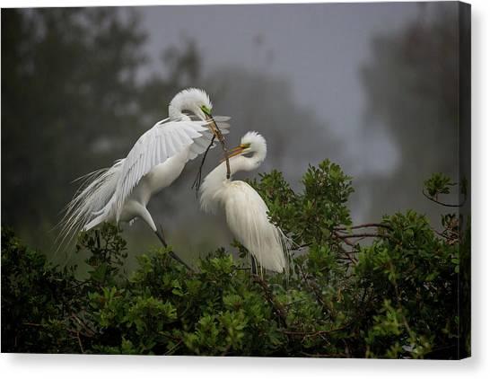 A Couple Of Birds Canvas Print