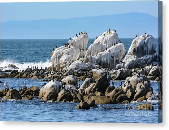 A Crowded Bird Rock Canvas Print