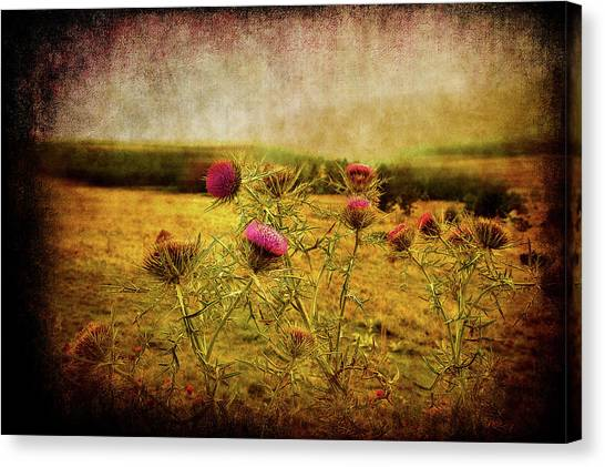Canvas Print featuring the photograph A Field Covered With Mist by Milena Ilieva