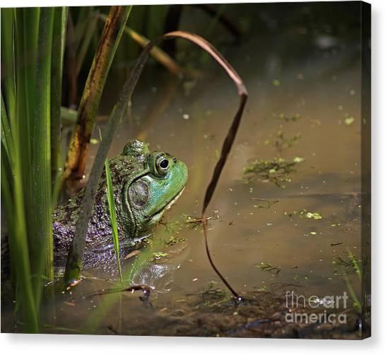 A Frog Waits Canvas Print