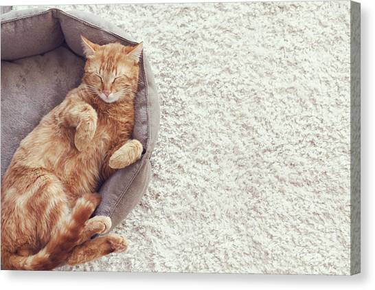 Basket Canvas Print - A Ginger Cat Sleeps In His Soft Cozy by Alena Ozerova