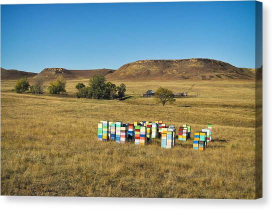 Canvas Print featuring the photograph A Great Place To Bee by Carl Young
