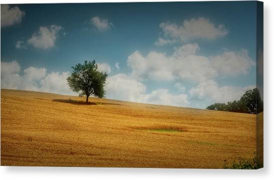 Canvas Print featuring the photograph A Machias Hillside by Guy Whiteley