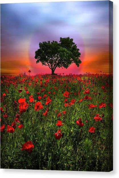 Poppys Canvas Print - A Magical Evening In Poppies by Debra and Dave Vanderlaan