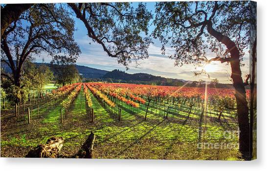 Sonoma Valley Canvas Print - A New Day In Napa by Jon Neidert