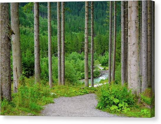 A Path To The River Canvas Print