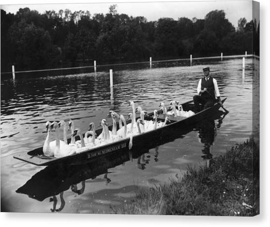 A Punt Full Of Swans Canvas Print by Hulton Archive