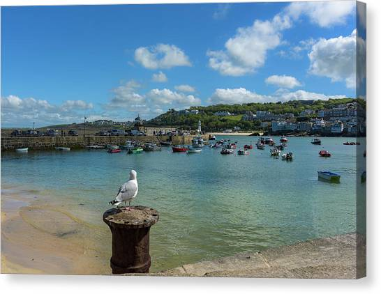 A Seagull Dreaming At The Harbour Canvas Print