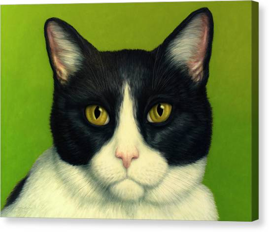 A Serious Cat Canvas Print