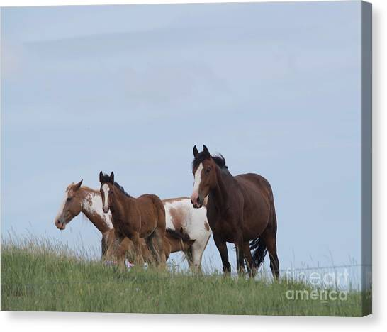 Little Things Canvas Print -  A Small Herd Of Horses by Jeff Swan