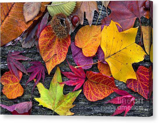 Change Canvas Print - Abstract Background Of Autumn Leaves by Artens