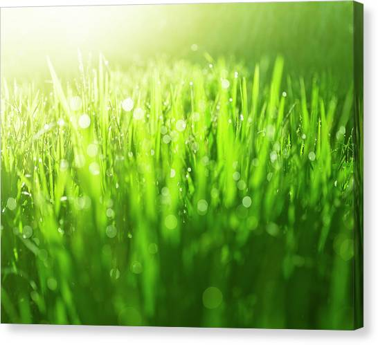 Blade Of Grass Canvas Print - Abstract Grass Background by Enjoynz