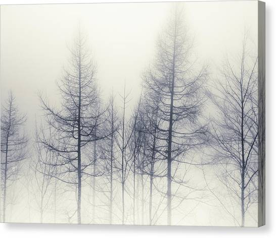 Abstract Trees In Winter Canvas Print
