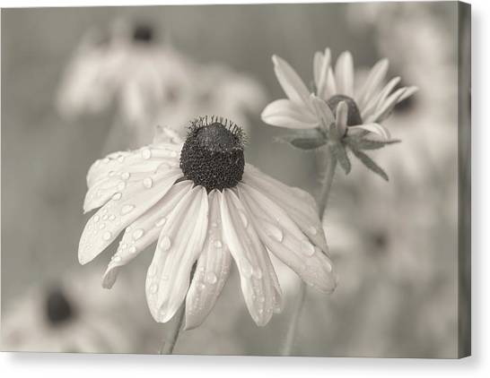 Canvas Print featuring the photograph Achromatic Adoration by Dale Kincaid