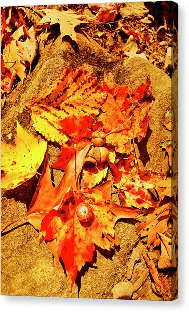 Acorns Fall Maple Oak Leaves Canvas Print