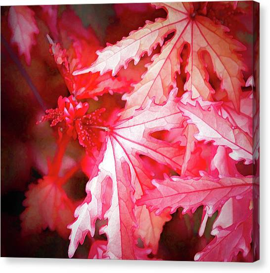 Actual Colors - Canvas Print