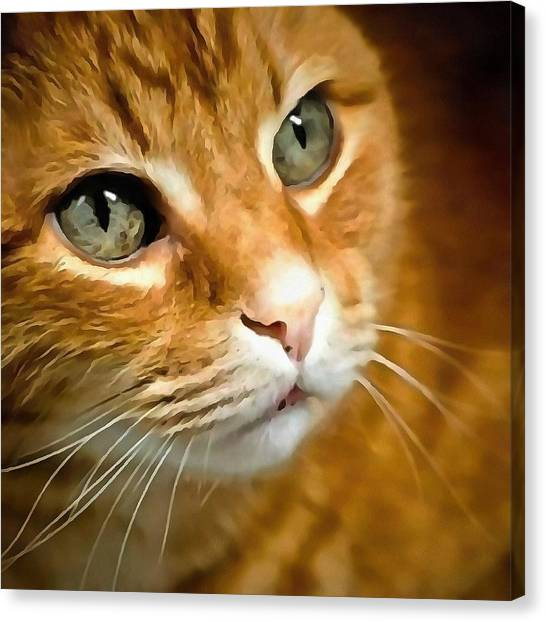 Adorable Ginger Tabby Cat Posing Canvas Print