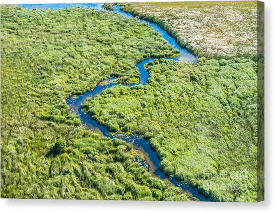 Bush Canvas Print - Aerial View Of A Small Stream And Lush by Efimova Anna