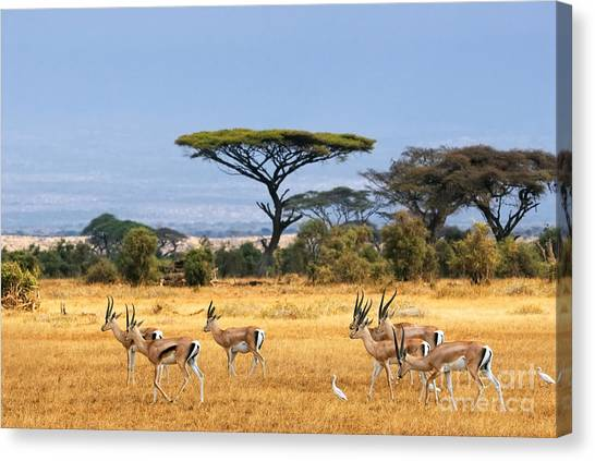 Bush Canvas Print - African Landscape With Gazelles by Oleg Znamenskiy
