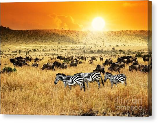 Bush Canvas Print - African Landscape. Zebras Herd And by Oleg Znamenskiy