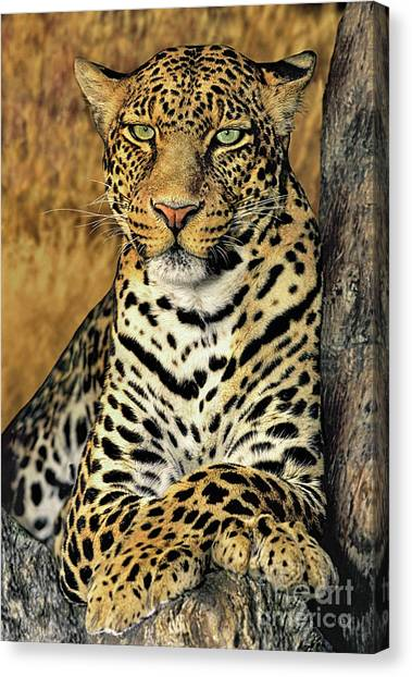 Canvas Print featuring the photograph African Leopard Portrait Wildlife Rescue by Dave Welling