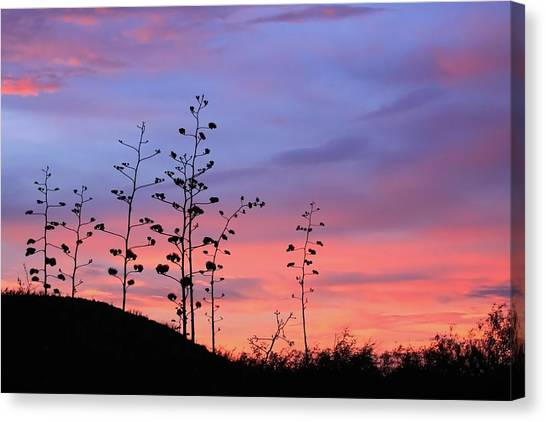 Canvas Print featuring the photograph Agave Sunset 1 by Dawn Richards