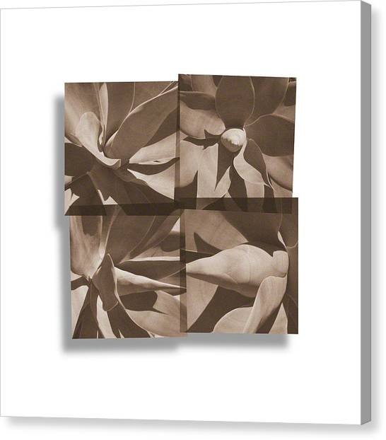Agaves Canvas Print
