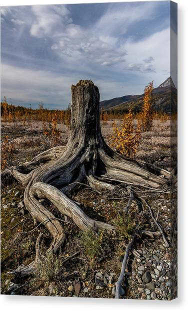 Canvas Print featuring the photograph Age-old Stump by Fred Denner