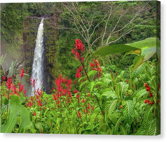 Canvas Print featuring the photograph Akaka In Red by Denise Bird