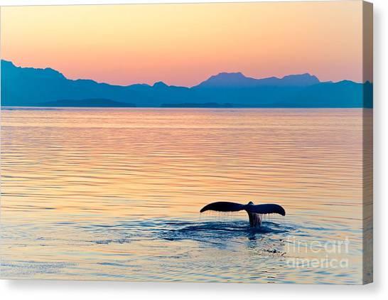 Glacier Bay Canvas Print - Alaska Whale Tail Sunset by Tonyzhao120
