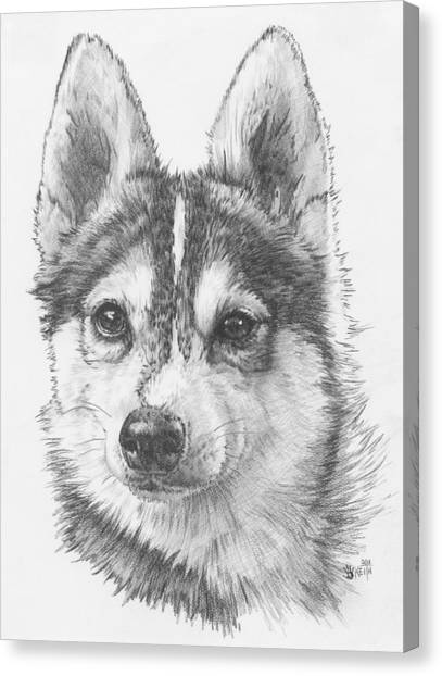 Canvas Print - Alaskan Klee Kai by Barbara Keith