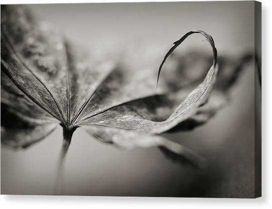 All In Canvas Print