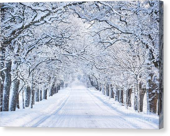 Woodland Canvas Print - Alley In Snowy Morning by Lemanna
