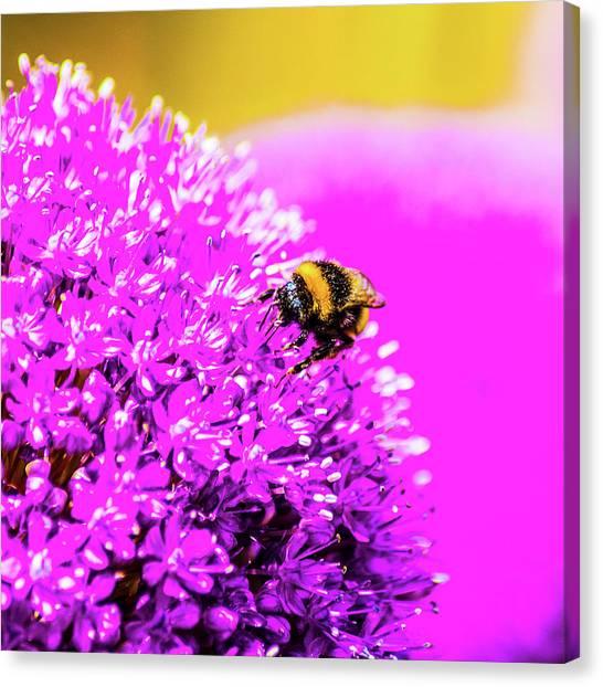 Allium With Bee 2 Canvas Print