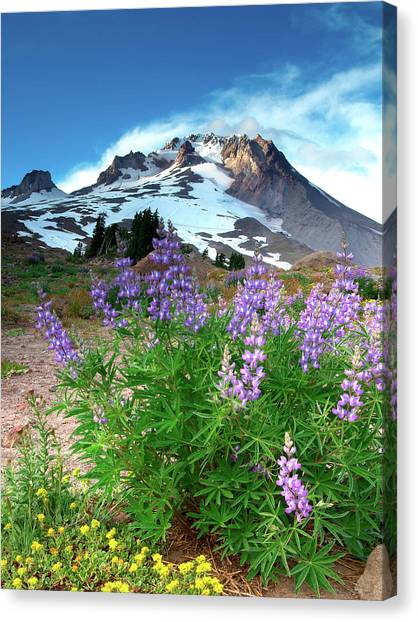 Alpenglow On Flowers And Mt. Hood Canvas Print