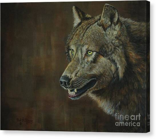 Alpha Male ......the Gray Wolf Canvas Print