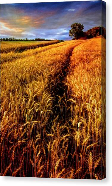 Canvas Print - Amber Waves Of Grain Painting  by Debra and Dave Vanderlaan