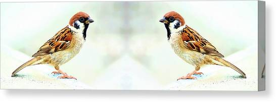 Canvas Print featuring the photograph American Tree Sparrows by Anthony Dezenzio