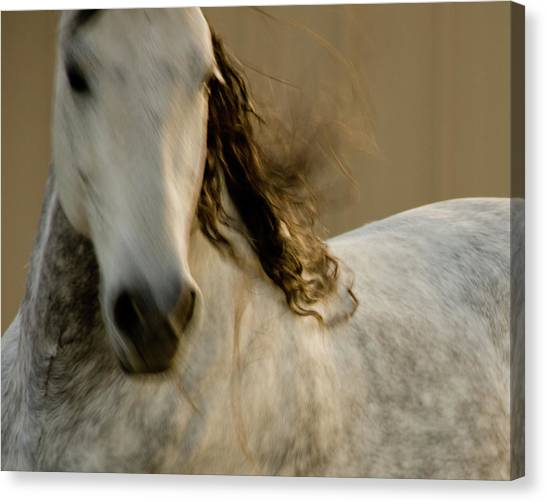 Canvas Print featuring the photograph Americano 1 by Catherine Sobredo