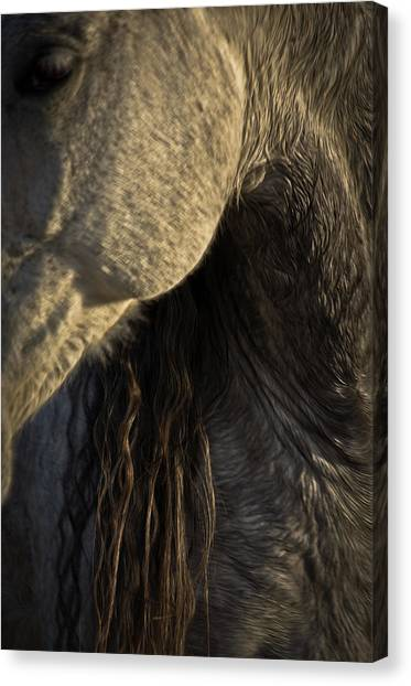Canvas Print featuring the photograph Americano 11 by Catherine Sobredo